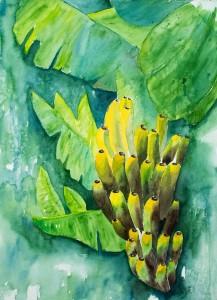 Bananen (gerahmt, 60x80 cm, Fr. 600.-)