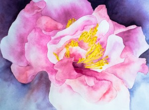Hibiskusblüte (gerahmt; 60x48 cm, Fr. 0.-)