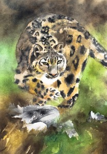 Jaguar (privat)